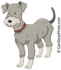 gris, peu, fourrure, chien