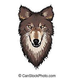 gris, tête, loup