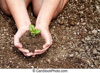 gros plan, enfant, plante, tenue, terre