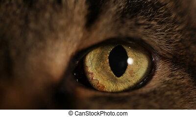 gros plan, hd:, extrême, œil chat