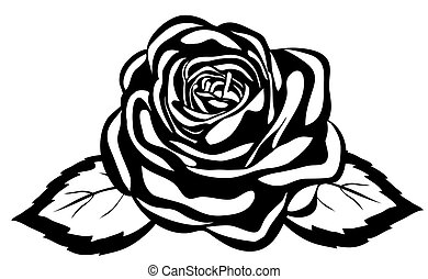 gros plan, résumé, rose., isolé, arrière-plan noir, blanc