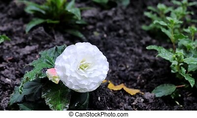 ground., fleur, tout, possible, croissant, voir, appareil photo, il, fleurs, marques, côtés, mouvement