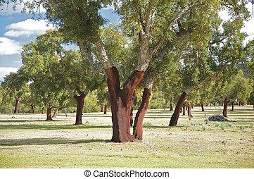 groupe, arbres, bouchon