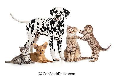 groupe, collage, vétérinaire, isolé, petshop, animaux familiers, animaux, ou