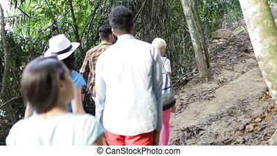 groupe, gens, voyageurs, équipe, dos, ensemble, jeune, randonnée, forêt, piste, trekking, vue, touristes, arrière