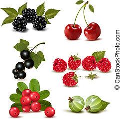 groupe, grand, illustration, vecteur, cherries., frais, baies