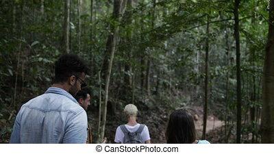 groupe, randonneurs, dos, ensemble, randonnée, piste, bois, forêt, trekking, voyager, amis, touristes, vue postérieure