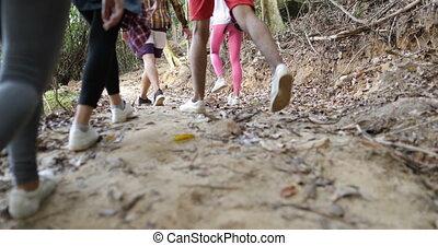 groupe, touriste, gens, randonnée, dos, bois, forêt, tenue, trekking, sentier, sacs dos, vue postérieure