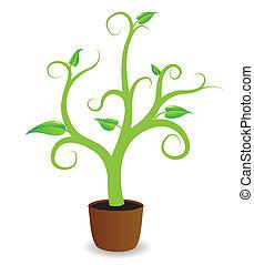 grow., plante, début, potted