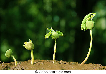growth-stages, plante