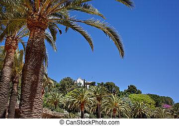guell, arbre, parc, barcelone, vert, paume, espagne