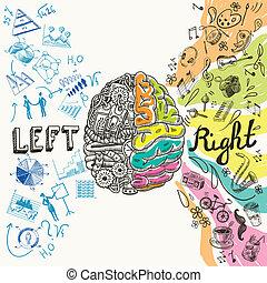 hémisphères, cerveau, croquis