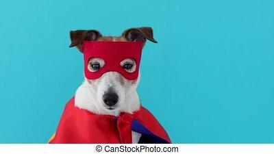 héros, russell, chien, déguisement, super, cric