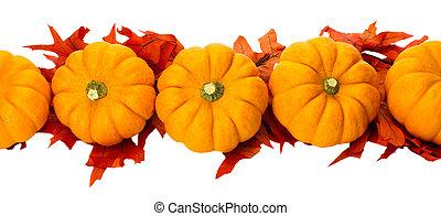 halloween, isolé, décoration thanksgiving, automne, blanc, ou