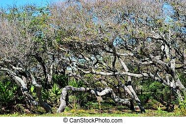 hamac, floride, arbres