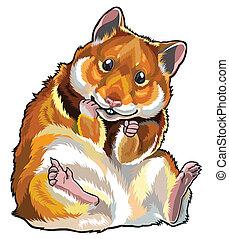 hamster, doré
