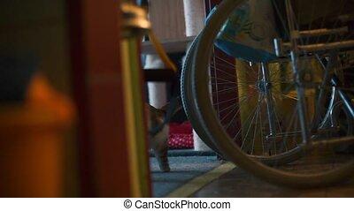 handicapé, teeth., fille sac main, fauteuil roulant, elle, prend, épicerie