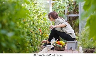 harvest., greenhouse., légumes, temps, panier, verdure, femme, jeune