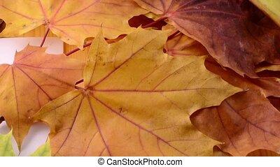 haut., coup, feuilles, slider., automne, arrière-plan., érable, fin, motorisé, hd