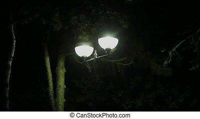 haut., fin, lanterne, briller, nuit
