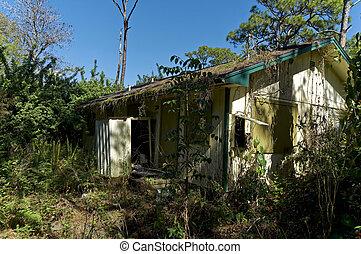 haut, maison, abandonnés, envahi, abordé, floride