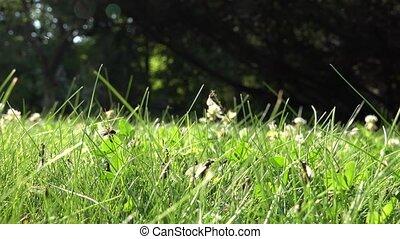 haut., mouche, ailé, essaimage, nid, fourmis, promenade, insecte, 4k, lot, temps, pendant, herbe, accouplement, nature.