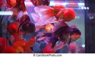 haut, shops., compteur, animaux familiers, aquarium., exotique, vente, assortiment, marché, variété, poissons, fin, bazar, fish, chouchou, chatuchak, exotique, commerce, diversité, coloré, affiché, décoratif, stalls.