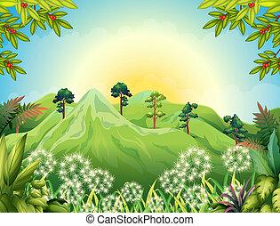 hautes montagnes, forêt