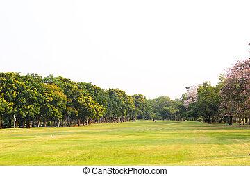 herbe, arbres verts