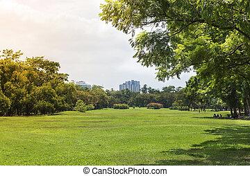 herbe champ, parc, arbres verts
