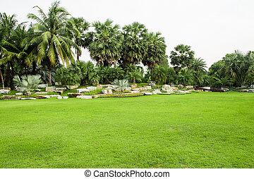 herbe champ, parc, vert