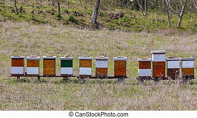 herbe champ, ruches