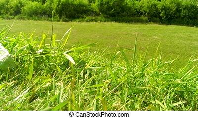 herbe champ, vent, vert