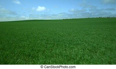 herbe champ, vert, frais