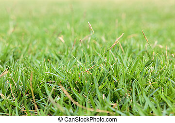 herbe champ, vert, haut fin