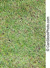 herbe champ, vert, surface