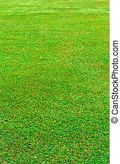 herbe champ, vert, vertical, mouillé