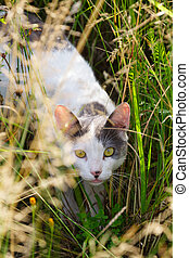 herbe, chat