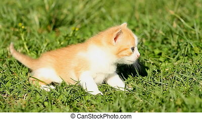 herbe, chaton