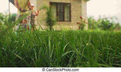 herbe, jardinier, élevé, coupures