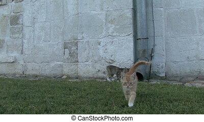 herbe, jouer, chaton
