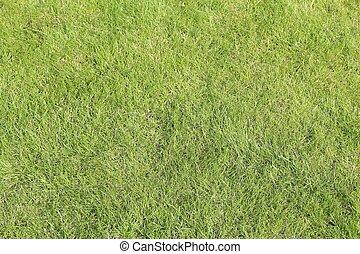 herbe, texture