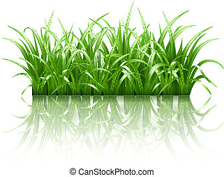 herbe, vecteur, vert