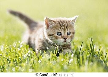 herbe, vert, chaton