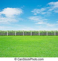 herbe, vert, long, barrière