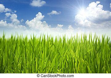 herbe, vert, sky.