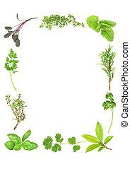 herbes, aromatique, frais