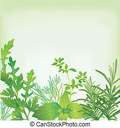 herbes, cadre, frais