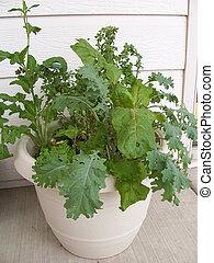 herbes, image, jardin, stockage