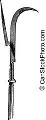 herbier, art, vieux, branc, vecteur, dessin, illustration, antiquité, fleur, gravure, ancien, sorcière, blanc, fleurir, bourgeon, gravé, fleur, arbrisseau, noisetier, image, hiver, noir, typon, vendange, fragilité, winterbloom, graver